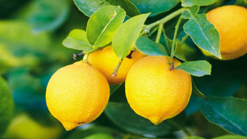 درمان پوسیدگی دندان - لیمو